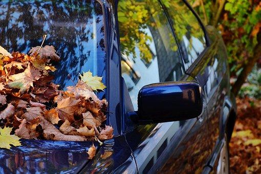Auto, Paint, Black, Leaves, Autumn, Shine, Colorful