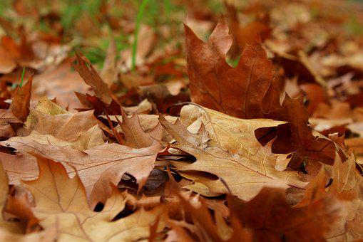 Foliage, Autumn, October, Dry Leaves, Fall, Collapse