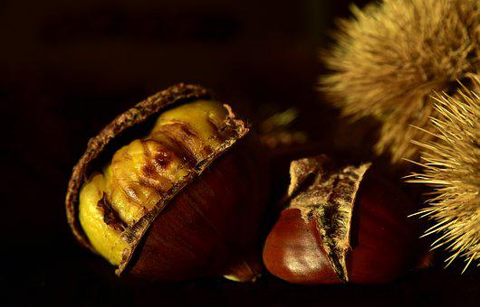 Chestnut, Nature, Maroni, Fruit, Spur, Autumn Fruit