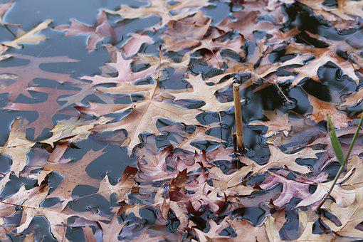 Leaves, Water, Nature, Wet, Pond, Autumn, Mood