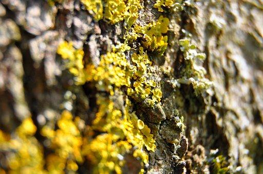Tree, Bark, Green, Nature, Log