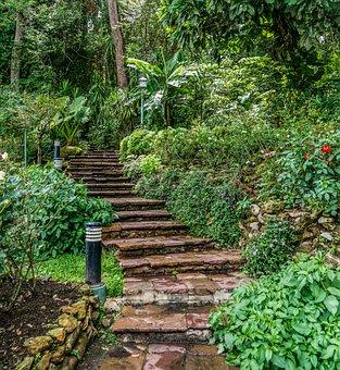 Stone Steps, Beautiful Landscape, Path, Forest