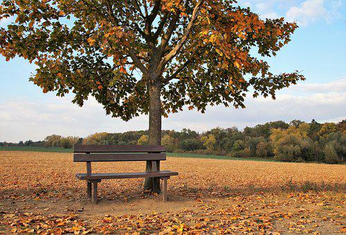 Bench, Abandoned, Field, Tree, Autumn, Colored