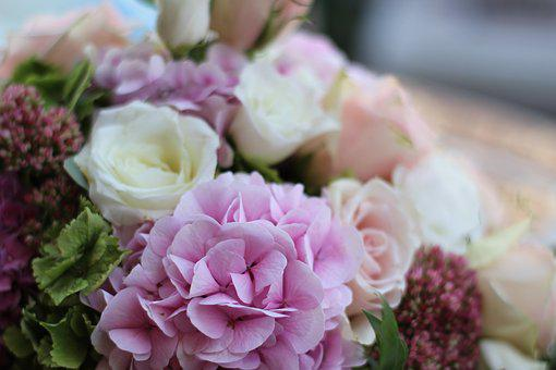 Hydrangea, Bouquet, Pink Hydrangea, Blossom, Bloom