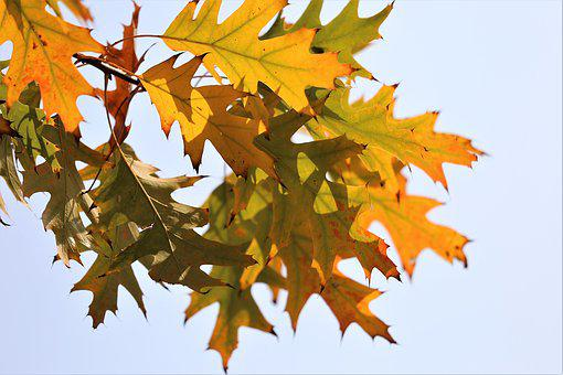 Colorful Leafs, Branch, Transparent, Sky, Backlight