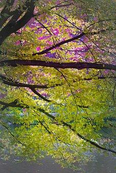 Branch, Autumn, Leaves, Bright, Deciduous Tree