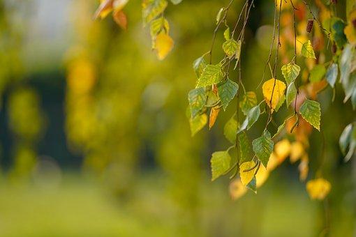 Leaf, Nature, Tree, Outdoors, Bright, Garden, Season