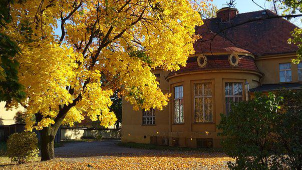 Autumn, Nature, Colors, Colour, Gold, Bile, Season