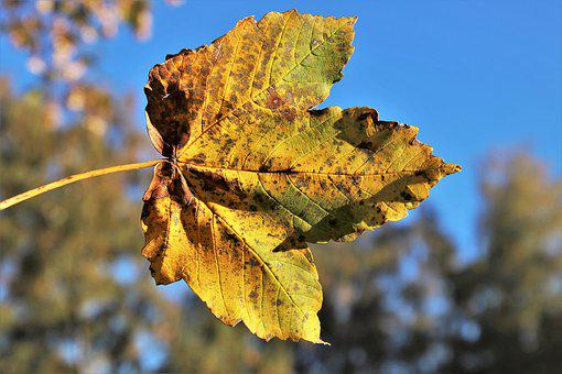 Colors Of Autumn, Lived, Leaf, Pattern, Leaves, Nature