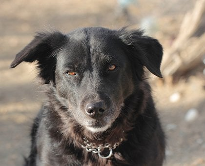 Man's Best Friend, Dog, Black, Desert, Walk, Leash