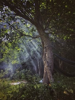 Tree, Forest, Morning, Mystic, Supernatural, Fairytale