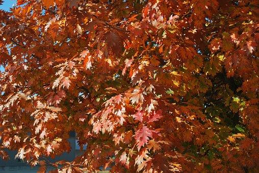 Fall, Fall Colors, Fall Leaves