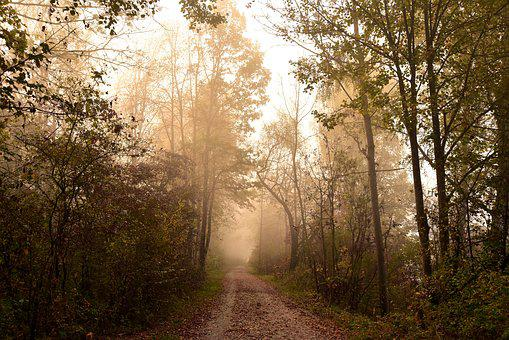 Forest, Haze, Landscape, Fog, Nature, Trees, Autumn