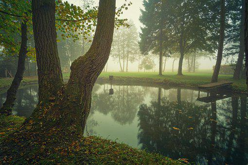 Fog, Lake, Pools, Tree, Cold, Foggy, Water, Nature