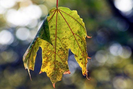 Holidays, Foliage, Wood, Autumn, Mood, Hilarity, Green