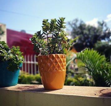 Plant, Flowerpot, Nature, Garden, Succulent, Gardening