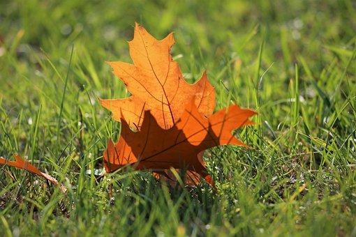 Brown Leaf, Grass, Transparent, Autumn, Colorful