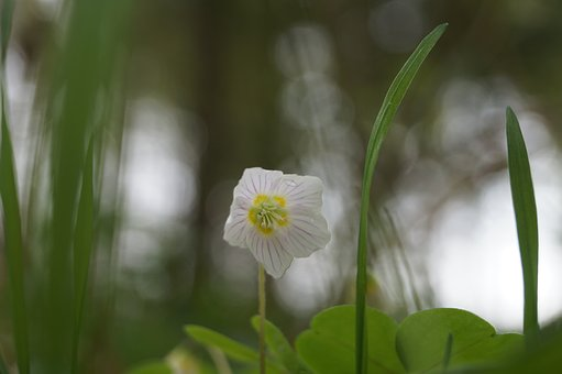 Flower, Forest Floor, The Forest Floor, Natural, Green