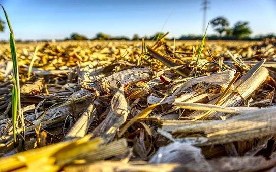 Corn, Field, Harvested, Mowed, Cleared, Empty, Broken