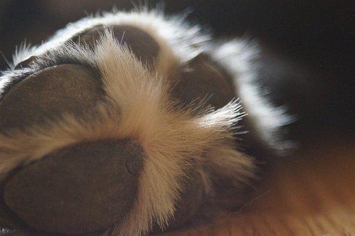 Hundepote, Dog, Macro, Fur, Pets, Details