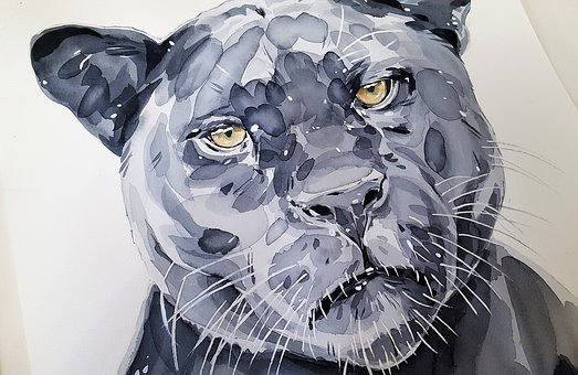 Jaguar, Cat, Black, Nature, Animal, Wild, Beast, Hunter