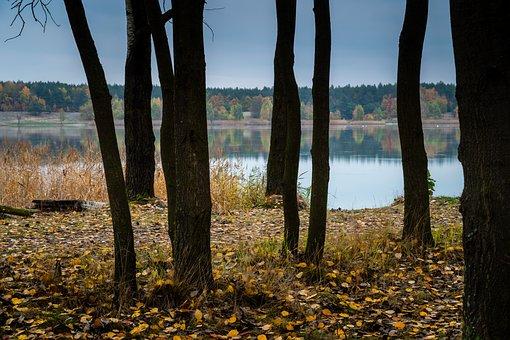 Autumn, Tree, Lake, Foliage, Landscape