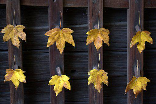Leaves, Yellow, Autumn, Arrangement, Wood, Rustic