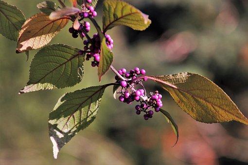 Sprig, Autumn, Closeup, Foliage, Leaves, Garden, Branch