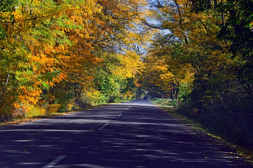Autumn, Autumn Road, Color, Cozy, Nature, Forest, Trees