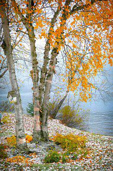 Birch, Nature, Landscape, Trees, Wood, Lake, Water