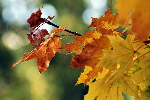 Holidays, Foliage, Wood, Autumn, Color, Nature