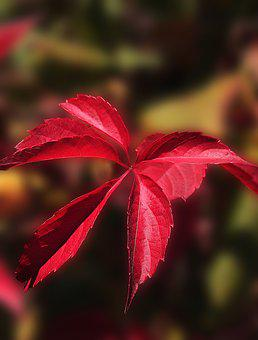 Foliage, Red Leaves, Autumn, Colors Of Autumn, Nature