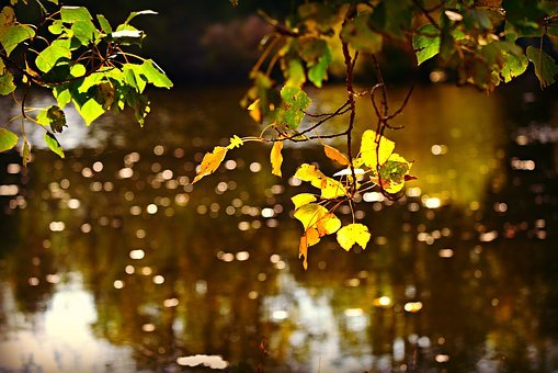 Autumn Leaf, Water, Pond, Bokeh, Reflection