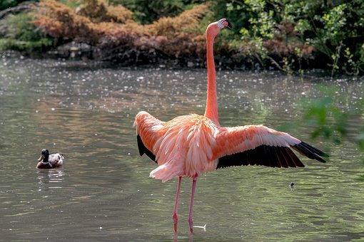 Flamingo, Animal World, Bird, Pride, Colorful, Pink