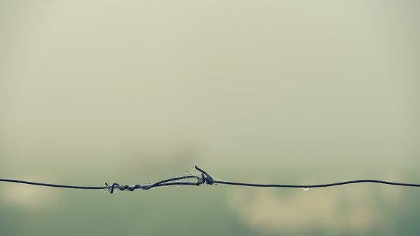 Barbed Wire, Fog, Foggy, Quiet, Water, Drip, Dew