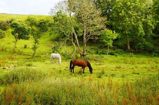 Scotland, Landscape, Nature, Mood