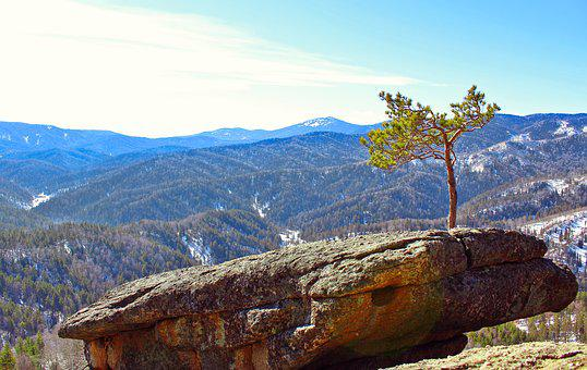 Pine, Stone, Rocks, Mountains, Cyanosis, Snow, Winter