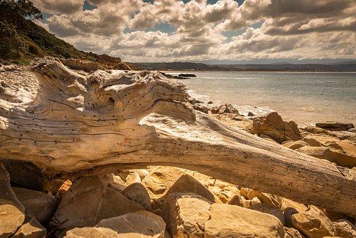 Coast, Sea, Beach, Stones, Flotsam And Jetsam, Wood