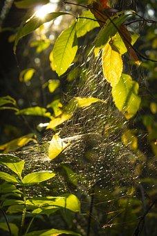 Light Leak, Sun Leak, Leaves, Light, Rays, Spiderweb