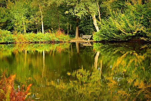 Pond, Water, Banks, Vegetation, Tree, Reflections