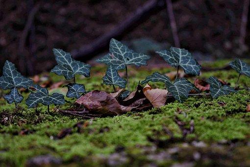 Nature, Green, Forest, Walk, Leaf, Grass, Summer, Rainy