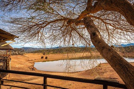 Africa, Lodge, Safari, Tree, Water Hole, Savannah