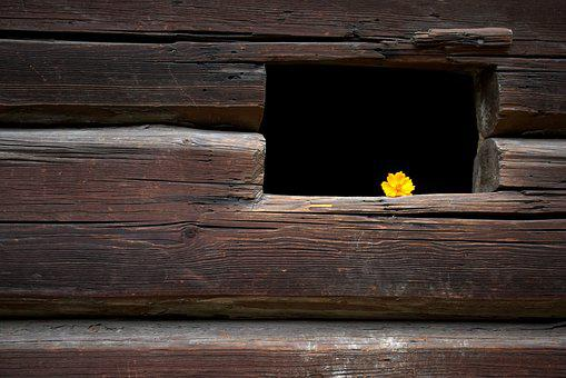 Flower, Yellow, Window, Autumn, Arrangement, Wood