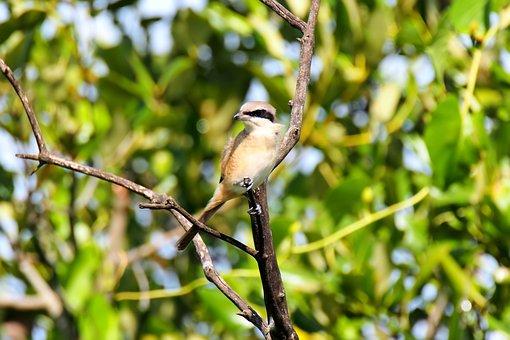Bird, Wild, Wildlife, Migratory, Seasonal, Animal