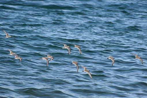Animal, Sea, Bird, Wild Birds, The Service In The Uk