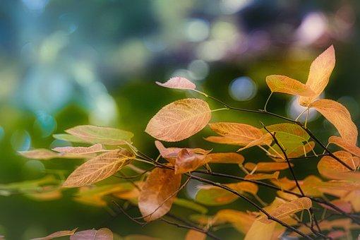 Leaves, Autumn, Mood, Fall Color, Fall Foliage