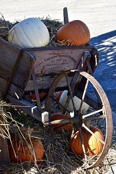Pumpkin, Orange, White, Halloween, Autumn, Vegetables