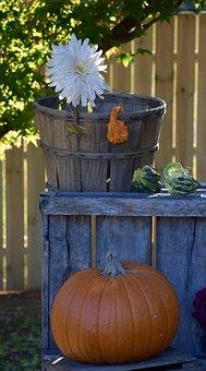 Pumpkin, Flower, Daisy, Gourd, Crate, Basket, Fence