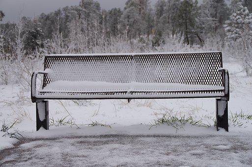 Snowy, Bench, Forest