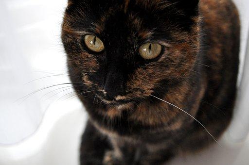 Cat, Eyes, Pet, Animal, Portrait, Feline, Face, Fur